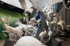Biomuseo-005