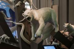 Biomuseo-006