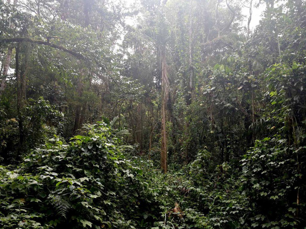 Sendero Los Quetzales en Boquete, Chiriquí